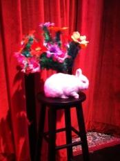 AB the Wonder Bunny!